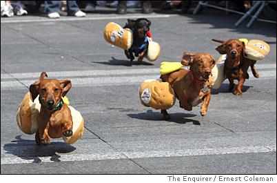 running of the wieners